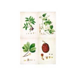 tavole botanica